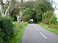 Road at Nether Locharwoods - geograph.org.uk - 565446.jpg
