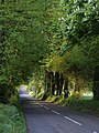 Road south of Lewtrenchard - geograph.org.uk - 422424.jpg