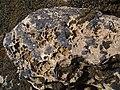 Rock Detail - geograph.org.uk - 477512.jpg