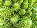 Romanesco Broccoli detail - (2).jpg
