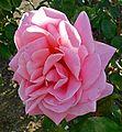 Rosa Mary Margaret McBride 1.jpg