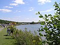 Rother Valley Country Park - geograph.org.uk - 54274.jpg