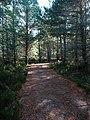 Rothiemurchus forest path - geograph.org.uk - 1528005.jpg