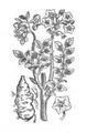 Roze fig.39 à 41.png