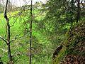 Ruine Baltenstein GO-4.jpg
