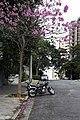 São Paulo em quarentena (49930252938).jpg