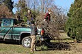 SB VSCC boxwood restoration at Mulberry Hill (16150731145).jpg