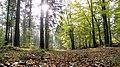Sahlenburg, Wernerwald - panoramio (1).jpg