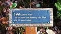Salal interpretive sign along the Lake Marie Trail in Umpqua Lighthouse State Park.jpg