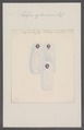 Salpa cylindrica - - Print - Iconographia Zoologica - Special Collections University of Amsterdam - UBAINV0274 092 08 0025.tif