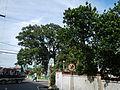SanJose,Luisianajf0118 23.JPG