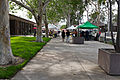 Santa Fe Springs Farmers Market at City Hall.jpg