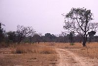 200px-Savane-boundiali-edit