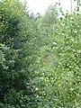 Schwarzwald-Schwäbische-Alb-Allgäu-Weg (HW5) im Naturpark Schönbuch - panoramio - Qwesy (2).jpg