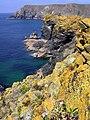 Seaward side of Asparagus Island - geograph.org.uk - 1071400.jpg