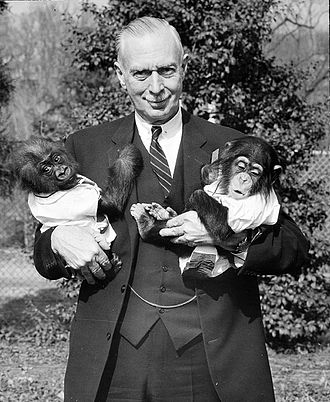 Homininae - A human holding a young gorilla and a young chimpanzee, three hominines.