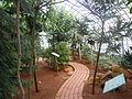 Serre de la Nouvelle-Calédonie - Jardin d'Auteuil.JPG