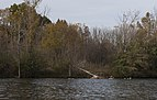 Sharon Woods-Schrock Lake in Fall 1.jpg