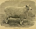 Sheep, breeds and management (1893) (14779554834).jpg