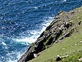 Sheer Cliff Face off Dunmore Head - geograph.org.uk - 16727.jpg