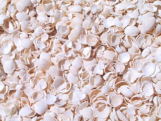 Seashell (color) color
