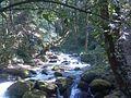 Shivapuri-Nagarjun National Park (24).jpg