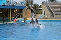 Show dauphins antibes.jpg
