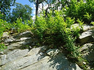 Bloomingdale, New Jersey - Shrubs and boulders on a hill overlooking Bloomingdale.