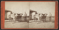 Sing Sing Prison. An Ox Team, from Robert N. Dennis collection of stereoscopic views.png