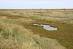 File:Sliver of saltmarsh - geograph.org.uk - 1492643.jpg