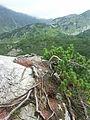 Slovakia-West Tatras-Rohace 4.JPG