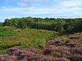 Snelsmore Common - geograph.org.uk - 936762.jpg