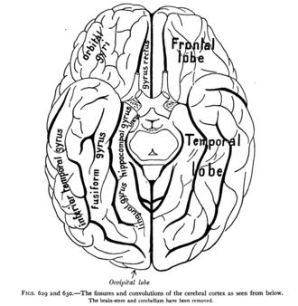Terminal nerve - Image: Sobo 1909 629