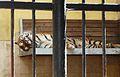 Sofia Zoo E992.jpg