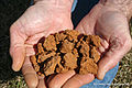 Soil material containing Sand, silt, clay.jpg