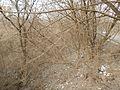 Sovetskiy rayon, Bryansk, Bryanskaya oblast', Russia - panoramio (109).jpg