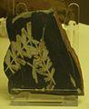 Sphenophyllum oblongifolium 2.JPG