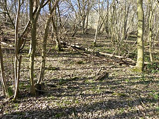 Spuckles and Kennelling Woods