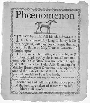 Broadside (printing) - 1798 broadside advertising 'Phoenomenon', stables of Maj. Thomas Leavett, Northampton, Massachusetts