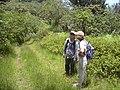 Starr-030729-0075-Hedychium coronarium-habitat-Hanawi stream-Maui (24009747904).jpg
