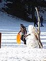 Starr-071223-0432-Pinus ponderosa-habit sledder and snowman-Lee Canyon Rd-Nevada (31145209700).jpg