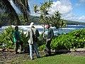 Starr-091104-0724-Scaevola taccada-habit view ocean with Mike Forest and Kamaui-Kahanu Gardens NTBG Kaeleku Hana-Maui (24356880384).jpg