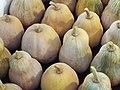 Starr-131002-2357-Cucurbita moschata-harvested fruit-Hawea Pl Olinda-Maui (24931638530).jpg