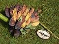 Starr-140925-1952-Musa balbisiana-fruit showing seeds-Pali o Waipio Huelo-Maui (24878833969).jpg
