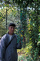 Starr 980529-4169 Strongylodon macrobotrys.jpg