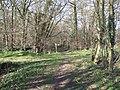Start of Footpath through the Woods - geograph.org.uk - 364392.jpg