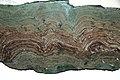 Stromatolites (Snowslip Formation, Belt Supergroup, Mesoproterozoic, 1.44 Ga; Glacier National Park, Montana, USA) 1 (15015915248).jpg