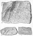 Stromatoporoids.jpg