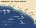Subespècies de guineu grisa de les illes Santa Bàrbara.png