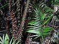 Sulawesi trsr ph20.jpg